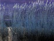 Reeds in Moonlight William Waldie