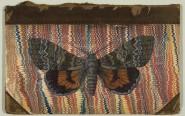 Red Underwing Moth © Helen Hunt