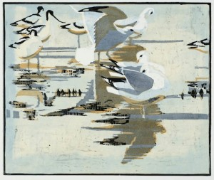 Common Gulls and Avocerts © Robert Greenhalf
