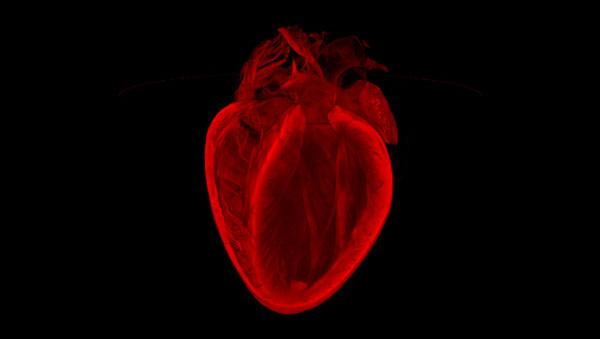 Heart - courtesy bhf.org.uk