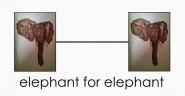 Elephant for Elephant
