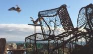 Herring gulls on the Hastings Stade