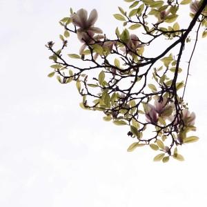 """""""Magnolia"""" - Robin Hutt"""
