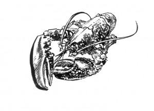 Lobster Stewart Walton