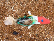 Fish made from plastic waste collected from a small section of beach.