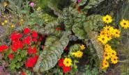 Bohemia Walled Garden flowers Photo by ZR