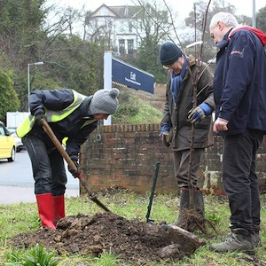 Planting a plum tree at Warrior Square Station Photo: TTH