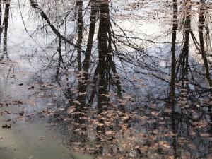 pond03