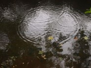 pond06
