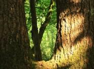 Binsted Woods website: