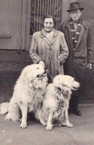 Lilian and Alf Foster with their dogs (1952)
