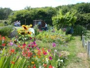Allotment heaven. Photo provided by AC