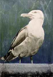 00-Crystal-Square-Gull