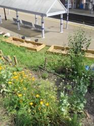 Platform siding