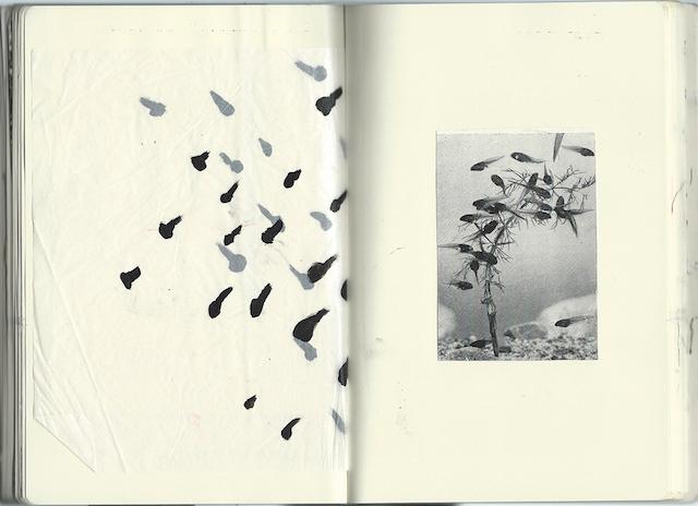 Hannah Morgan precious fragments