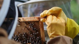 Beeversity