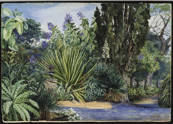 View in the Garden of Acclimatisation, Teneriffe.