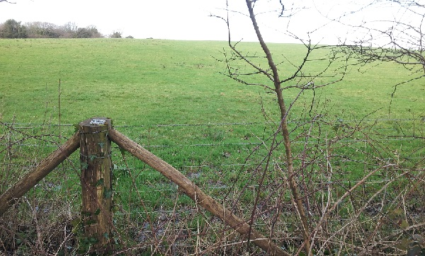 Field on the north side of Fairlight Road which is under consideration for the council's solar farms scheme.