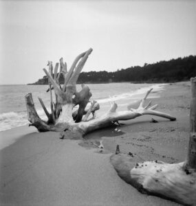 Photograph of a beached tree. Taken in Perros-Guirec, France. ,1936 All images are copyrighted to Tate, London and must be credited © Photo ©Tate. Artist: Agar, Eileen